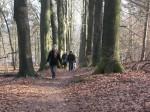 opleiding wandel en natuurcoach